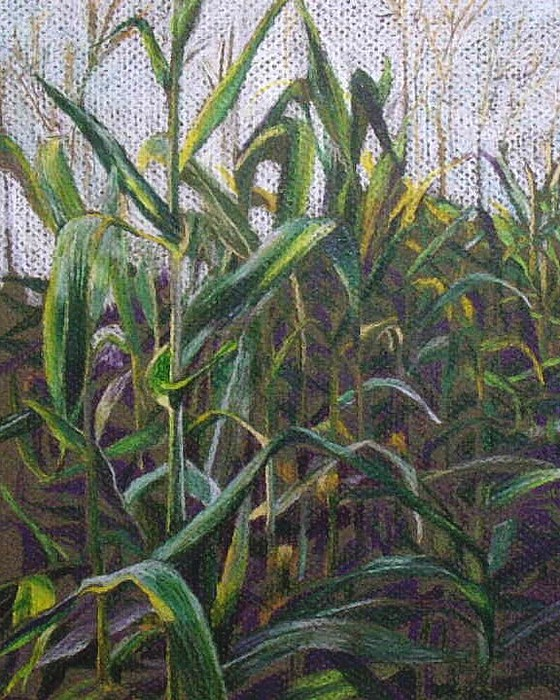 Farm Drawing - Harvest Shadows by Jan Cline-Zimmerman