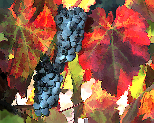 Wine Painting - Harvest Time Grapes And Leaves by Elaine Plesser