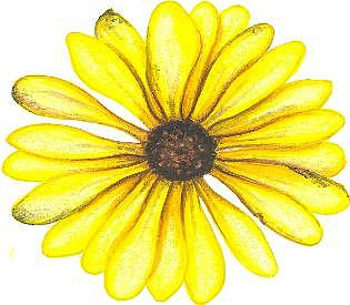 Flower Painting - Have A Daisy Day by Elizabeth H Tudor