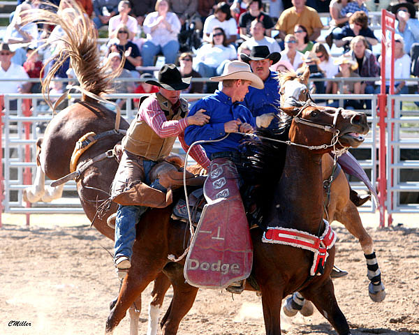 Rodeo Photograph - Helping Hands.. by Carol Miller