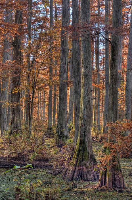 Cypress Photograph - Heron Pond Dawn by Steve Gadomski