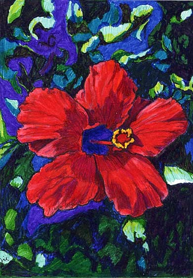 Flower Drawing - Hibiscus by Judy Lewis