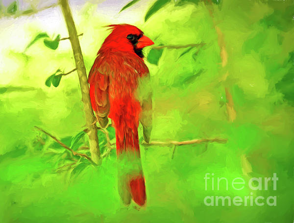 Male Cardinal Photograph - Hiding Behind The Leaves - Male Cardinal Art by Kerri Farley