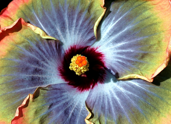 Flower Photograph - Hieroglyphics Of Nature by Mitch Cat