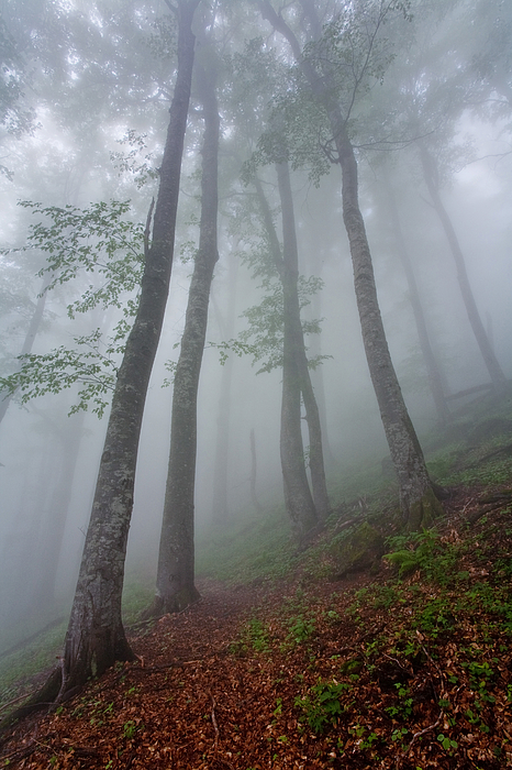 Rain Photograph - High Forest by Evgeni Dinev