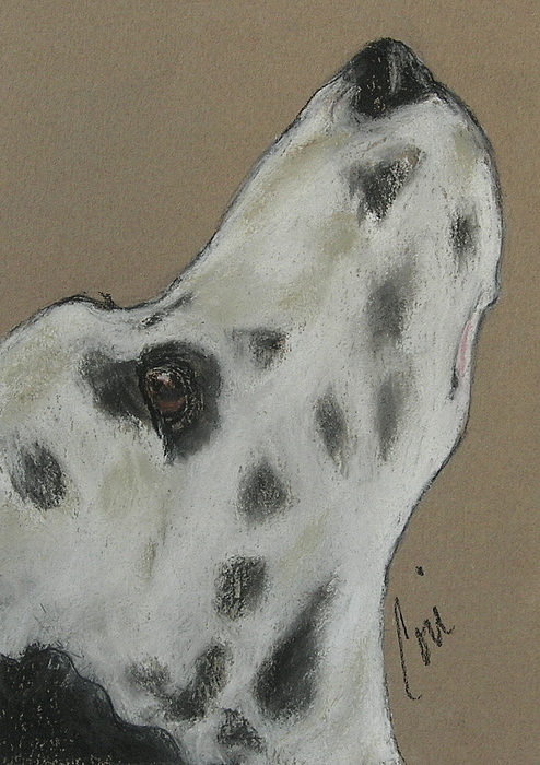 Dalmatian Drawing - Highly Motivated by Cori Solomon