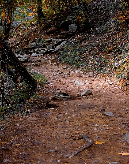 Trail Photograph - Hiking Trail To Abrams Falls by DigiArt Diaries by Vicky B Fuller