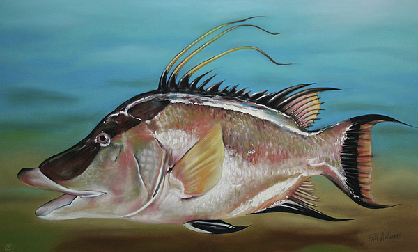Hog Fish Pastel - Hog Fish by Paul Autodore