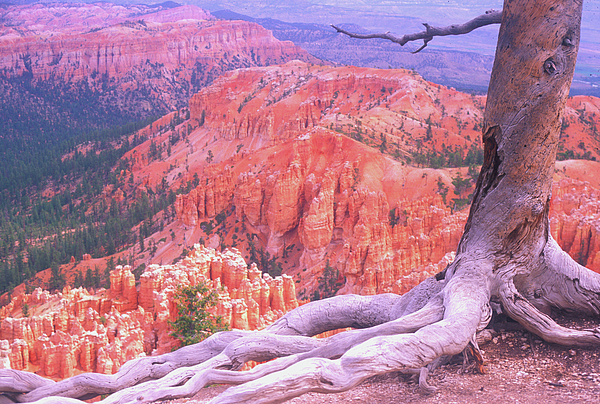 Utah Photograph - Holding On by Dave Hampton Photography