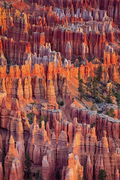 Bryce Canyon National Park Photograph - Hoodoos by David Cote