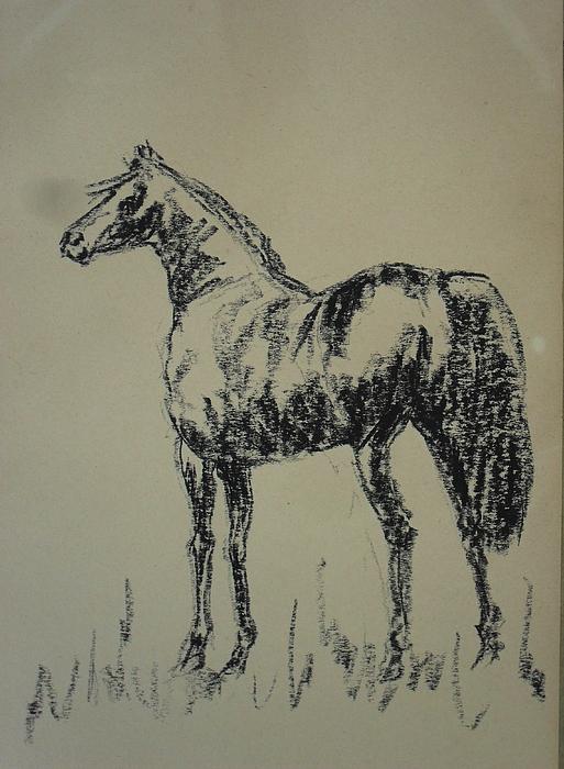 Animal Pastel - Horse 14 by Mohd Raza-ul Karim