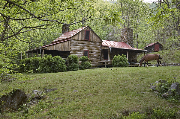 Day Photograph - Horse Grazing In The Yard Of A Mountain by Greg Dale