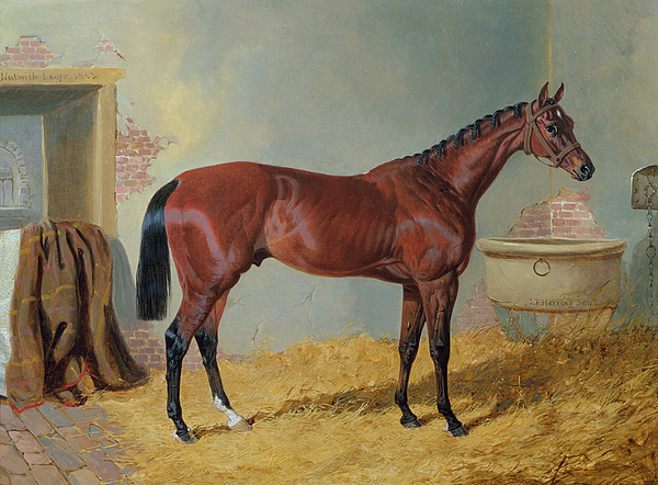 Horses Painting - Horse In A Stable by John Frederick Herring Snr