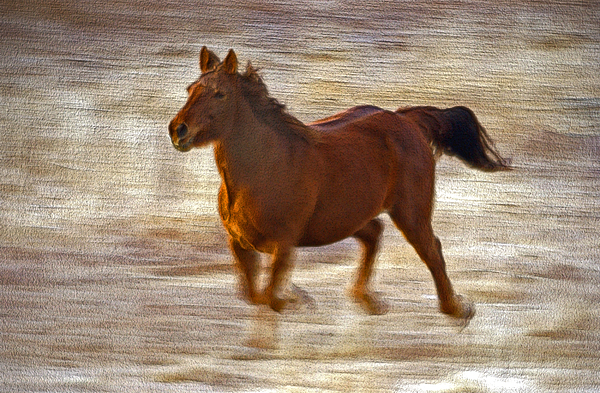 Horse In Motion Photograph by James Steele