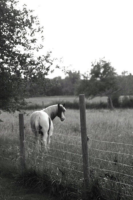 Horse Photograph - Horse by Linda  Stover