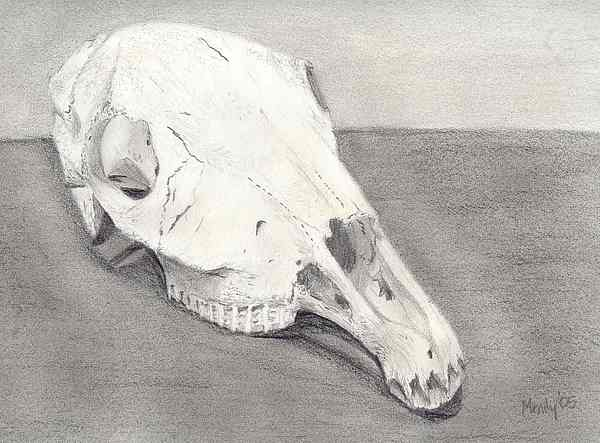 Horse Drawing - Horse Skull by Mendy Pedersen