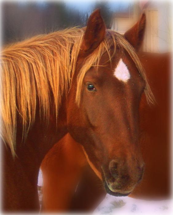 Horse Photograph - Horsin Around by Emily Doyle