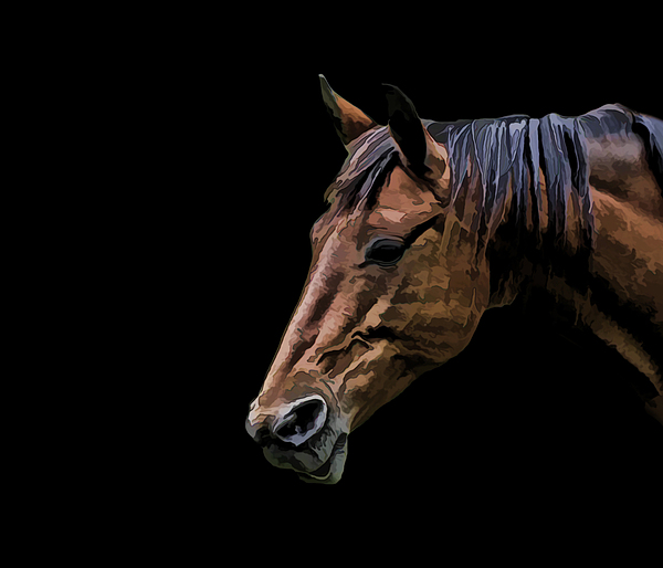 Horse Photograph - Horsing Around by Gary Smith