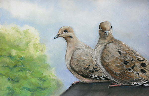 Mourning Dove Painting - House Sitters by Charlotte Yealey