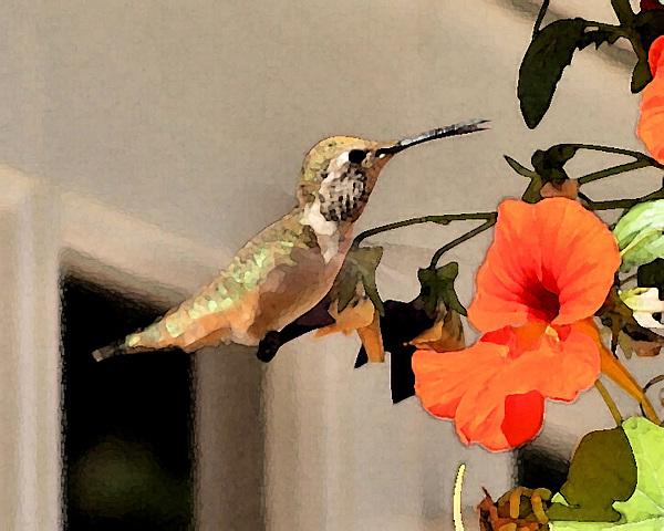 Birds Photograph - Hummer And  Nastursians by Ellen Lerner ODonnell