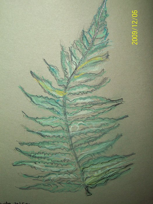 Ferns Mixed Media - I Love Ferns by Nancy Caccioppo