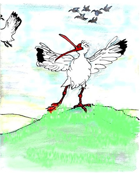 Ibis Drawing - Ibis May Never Fly Again by Carol Allen Anfinsen