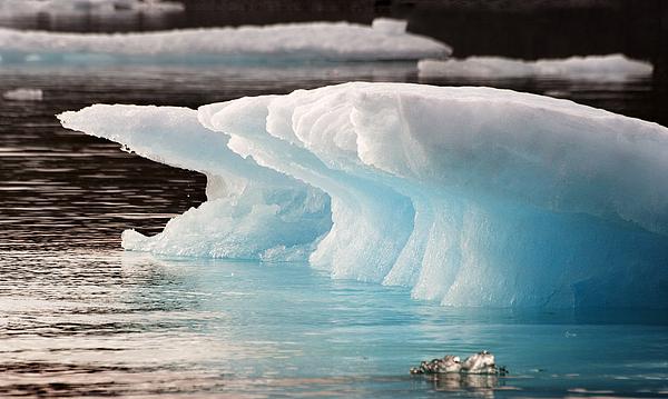 Iceberg Photograph - Ice Bears by Elisabeth Van Eyken
