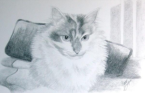 Cat Drawing - Idget by Joette Snyder