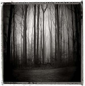 Tree Photograph - Illusion Of Clarity by Lauren Kaplan