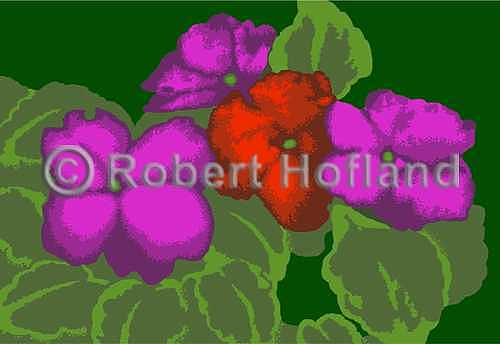 Florals Digital Art - Impatiens by Robert Hofland