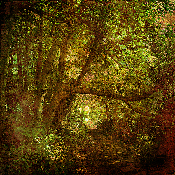 Forest Photograph - In A Forest by Inesa Kayuta