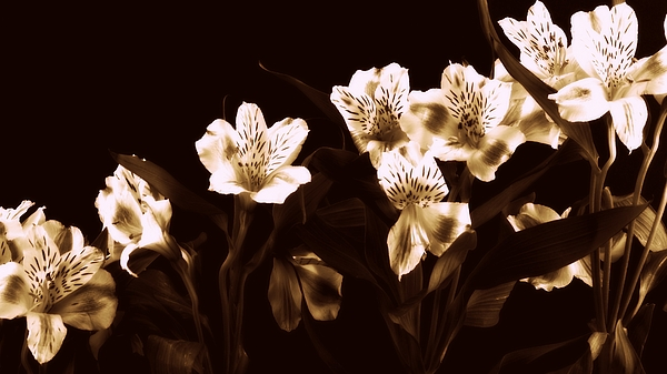Flowers Photograph - In A Line by Diane Reed