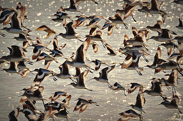Birds Photograph - In Flight by Paul Causie