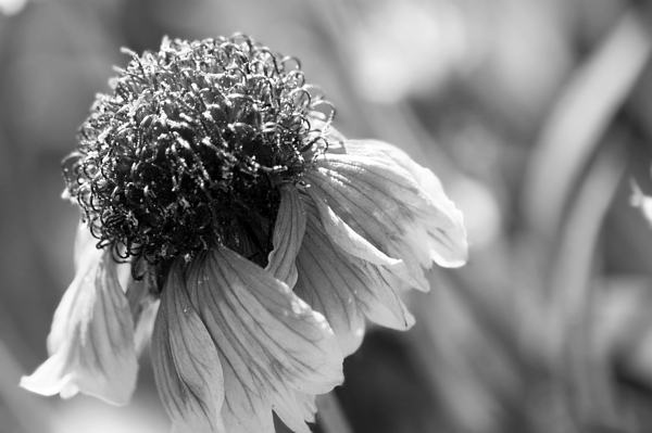 B&w Photograph - In Light Of Nature by Terrie Taylor