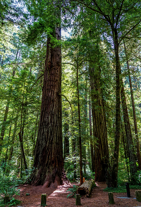 Trees Photograph - In Person by Ric Schafer
