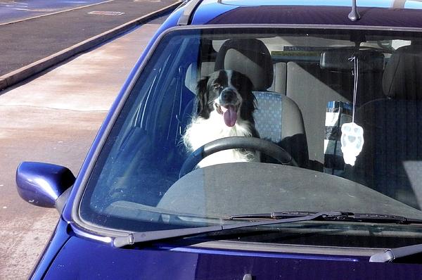 Handheld Photograph - In The Driving Seat by Nik Watt