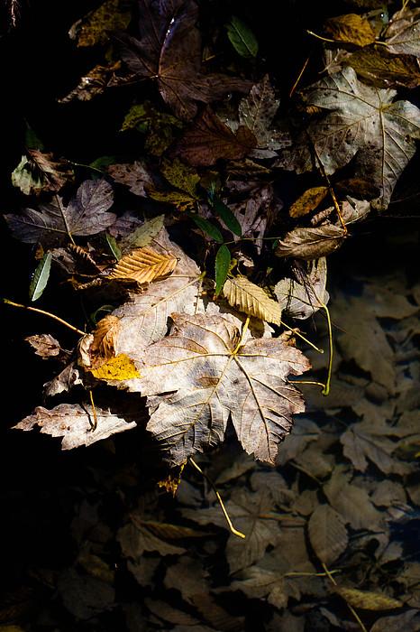 Fall Photograph - In The Fall by Marta Grabska