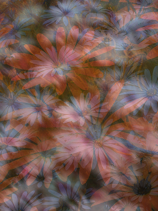 Flowers Digital Art - In The Garden by Eileen Shahbazian