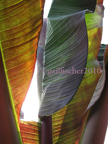 Botanical Garden Mixed Media - In The Land Of The Giant Leaves  by Gail Fischer