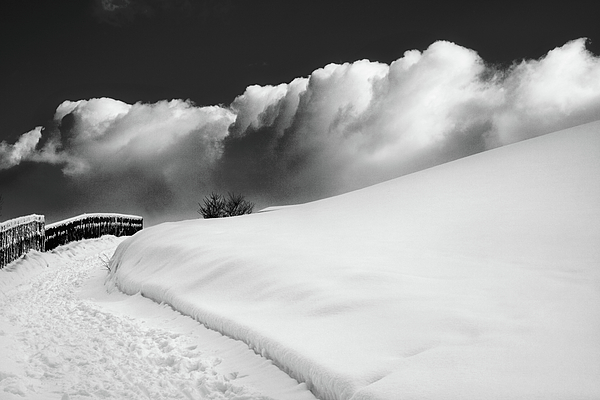 Bw Photograph - in the Ore Mountains by Dorit Fuhg