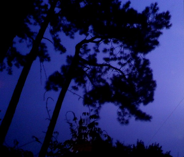 Trees Photograph - In The Pines by Leslie Revels