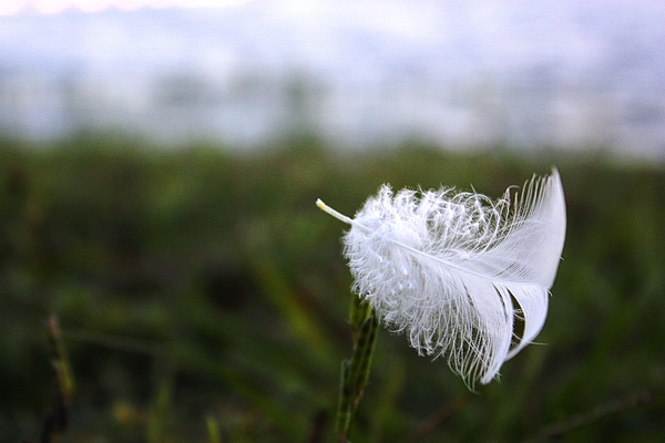 Feather Photograph - In The Wind by Jamie Smith