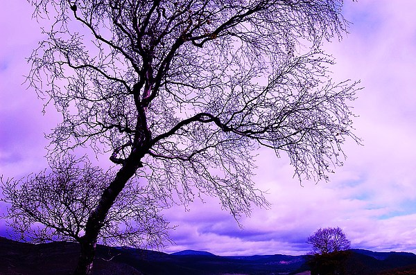 Tree Photograph - In Touch by HweeYen Ong