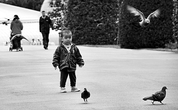 Boy Photograph - Innocence by Fraser Davidson