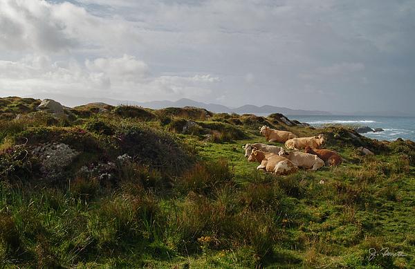 Ireland Photograph - Irish Rustic by Joe Bonita