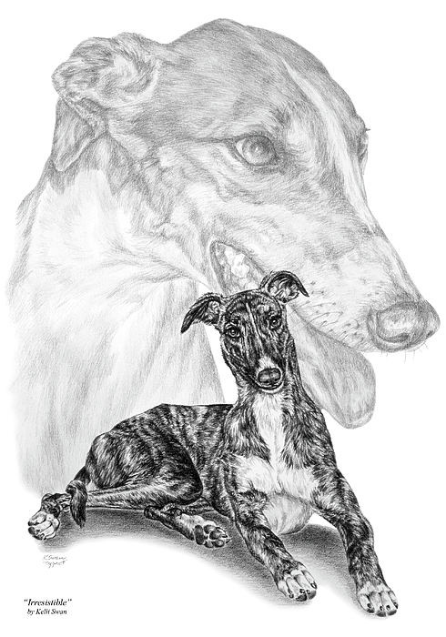 Greyhound Drawing - Irresistible - Greyhound Dog Print by Kelli Swan
