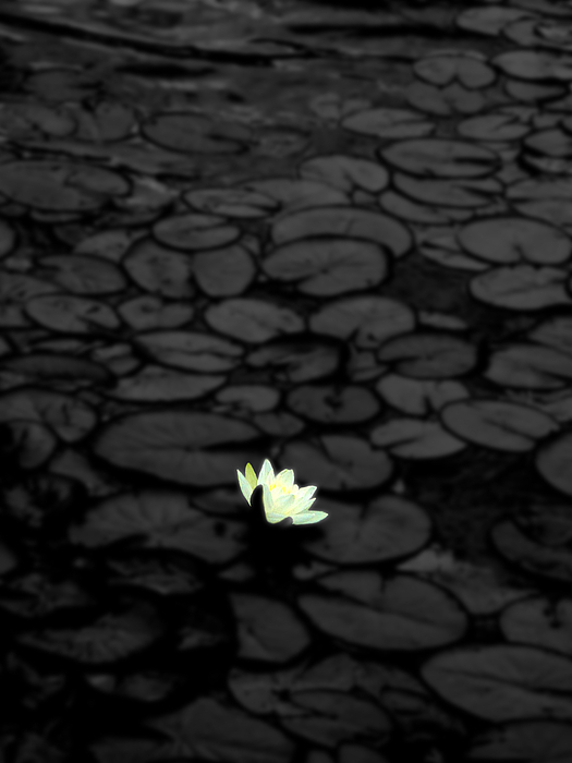 Flower Photograph - Isolation by Roberto Alamino