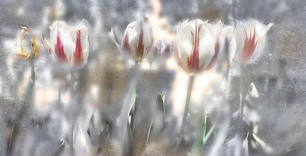 Flowers Photograph - It Was A Beautiful Day by Inesa Kayuta