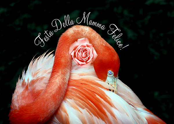 Greeting Card Photograph - Italian Happy Mothers Day Flamingo by Donna Proctor
