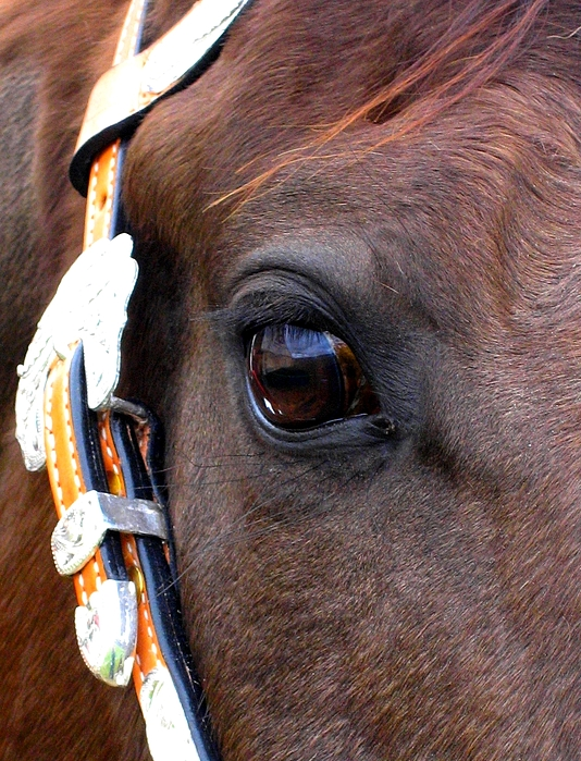 Horse Photograph - Its In The Eye by Sabina Haas